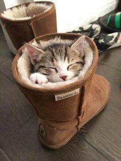 Gatos cansados