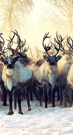 reindeer.....something like this would be great over the fireplace with my sleigh and greens on the mantle
