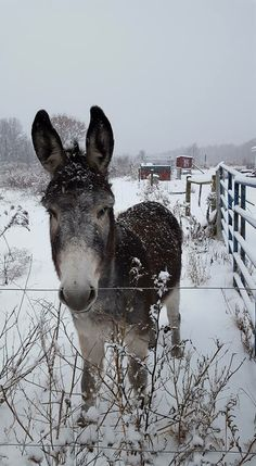 Allie Zimmerman ~ Only Donkeys