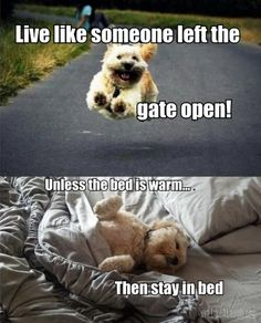 Funny dog quotes For more humor dogs and hilarious animal memes visit www.bes - Funny Dog Quotes - The post Funny dog quotes For more humor dogs and hilarious animal memes visit www.bes appeared first on Gag Dad. Funny Animal Pictures, Dog Pictures, Funny Animals, Cute Animals, Random Pictures, Hilarious Pictures, Animals Dog, Funny Photos, Dog Quotes