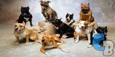 Los 9 perros más peligrosos del mundo…