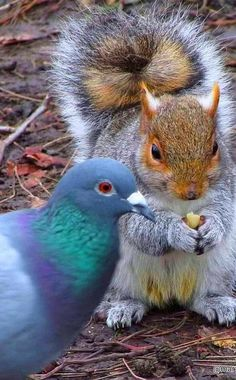 Amor Animal, Mundo Animal, Cute Creatures, Beautiful Creatures, Beautiful Birds, Animals Beautiful, Animals And Pets, Funny Animals, Unlikely Animal Friends