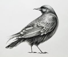 Popular items for crow illustration on Etsy