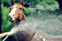 Every time. I've given up hope that I will be completely dry after I've given my horse a bath. Equestrian Memes, Equestrian Problems, Equestrian Style, Horse Riding Quotes, Horse Quotes, Horse Sayings, Girl Sayings, Animal Quotes, Funny Sayings