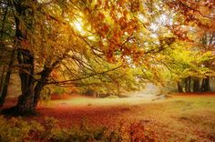 autumn landscape. colorful trees in deep forest