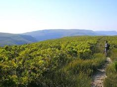 de hoop whale hiking trail - Google Search Hiking Trails, Whale, Hoop, Vineyard, Adventure, Google Search, Outdoor, Ideas, Outdoors