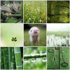 Dewy Greens & Spring Honeydew Inspiration Board