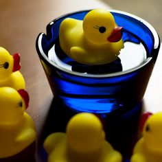 Duck floating in small blue glass container
