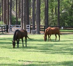 Another of my precious Southern Pines, NC.  This is Horse Country.
