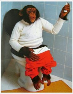 So What Chimpanzee On Toilet Framed Poster Monkey See Monkey Do, Ape Monkey, Funny Animal Videos, Funny Animals, Cute Animals, Smiling Animals, Cute Animal Photos, Funny Animal Pictures, Toilet Art