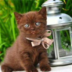 <3 Pretty, unusual color...all I need is this sweet kitten and a white kitten, our family would be complete! lol <3