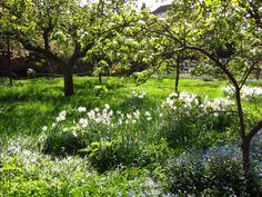 The Orchard Garden at Fenton House in Spring by Laura Nolte, via Flickr