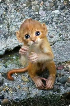 What a precious face. I pray that this lil guy isn't abandoned or in a zoo. Hope Mama's nearby.