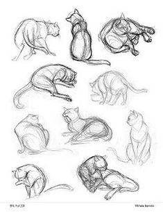 Fabulous Ideas Can Change Your Life: Iran Kedisi Persian Cat cat anatomy reference.Ragdoll Cat Names fat cat pregnant.Cat Breeds For Kids. Drawing Techniques, Drawing Tips, Drawing Sketches, Sketching, Cat Reference, Drawing Reference, Anatomy Reference, Animal Sketches, Animal Drawings