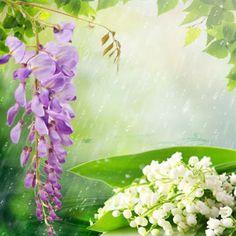 Rain Fragrance Oil   Natures Garden Fragrance Oils #rainfragrance #fragranceoil #freshozonescent