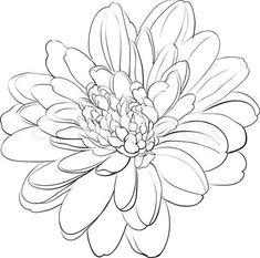simple chrysanthemum drawing - Google Search