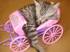 Every princess needs a carriage. via @EmrgencyKittens
