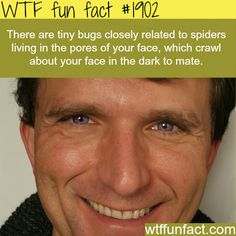Tiny bugs living in your pores - OMG! TOO Much Information! ...WTF fun facts