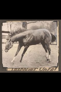 Secretariat (who happens to be the  great grand-dad of the horse Jenna rides!)