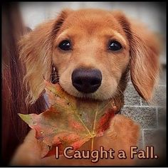 I Caught A Fall Check more at http://www.funniestmemes.com/funniest-memes-i-caught-a-fall/