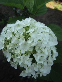 Első virága! Tavaszi ültetés.