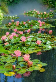 Raising flowers is already one of the happiest things in life. But if a dear person plantes a lot of flowers for you? Sea Flowers, Summer Flowers, Purple Flowers, Beautiful Flowers, Lotus Garden, Purple Garden, Lotus Pond, Pond Plants, Water Plants