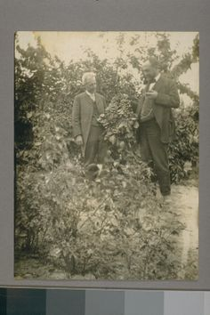 Luther Burbank (to the left), W. Atlee Burpee (to the right), Luther Burbank in his garden testing out cherries. Contributing Institution: UC Berkeley, Bancroft Library