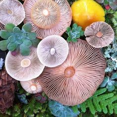 Mushrooms and succulents.