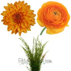 FiftyFlowers.com - DIY Dahlias and Ranunculus Combo Pack