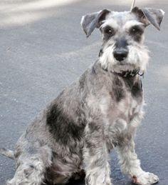 Photo of Rescue Dog Pepper (Peppi)