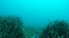This video was realized by GoPro HD HERO camera, with a Waterproof Dive Housing, mounted on speargun.