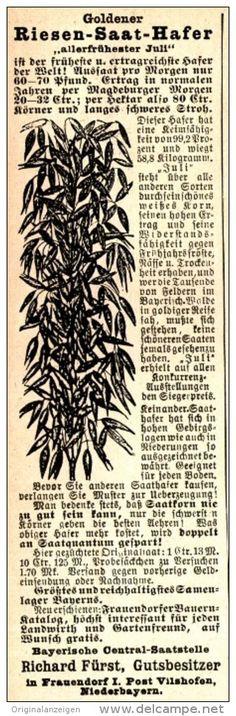 Original-Werbung/ Anzeige 1899 - RIESENSAAT-HAFER / BAYERISCHE CENTRAL-SAATSTELLE FÜRST / FRAUENDORF - ca. 50 X 155 mm