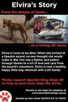 Please read & share Elvira's Story. She's just one of the neglected & abandoned dogs Spanish Stray Dogs has helped.   http://www.spanishstraydogs.org.uk/