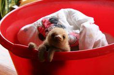 baby sloth ♡