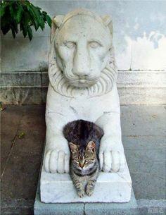 貓版的俄羅斯娃娃??