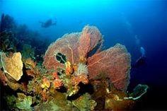Nusa Pombo Ambon Indonesia  Pulau Pombo merupakan salah satu pulau cantik yang tak berpenghuni di Ambon, Propinsi Maluku. Pombo berasal dari bahasa Portugis yang mempunyai arti merpati, sehingga Pulau Pombo juga dikenal dengan nama Pulau Merpati. - See more at: http://tiketpesawatklaten.blogspot.com/2014/01/nusa-pombo-ambon-indonesia.html#sthash.nvK2Pcl7.dpuf