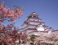 Japon   ...   de magnifiques cerisiers en  fleurs  !