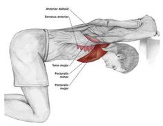 How To Build Better Chest Muscles Shoulder Stretching Exercises, Back Exercises, Muscle Anatomy, Shoulder Workout, Massage Therapy, Physical Therapy, Excercise, Workout Board, Workout Belt