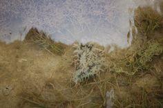 ragged sea hare at lover's key state park, estero island, florida