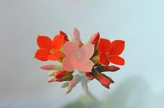 Amazing Little Flowers