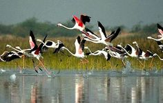 World famous birds sanctuary in india.