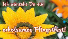 Pfingsten Gästebuch Bilder - erholsames-pfingstfest.jpg - GB Pics