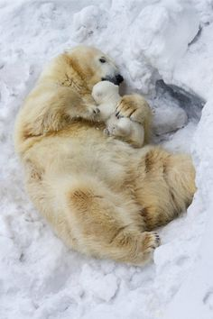 "tulipnight: "" Mother's love by Anton Belovodchenko """