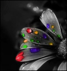 The splashes of color against the black and white flower :))