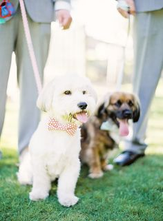 I'm so doing this! Can't leave my puppies home while momma and daddy say I do:)
