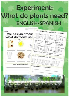FREE experiment worksheet  What do plants need? English and Spanish.