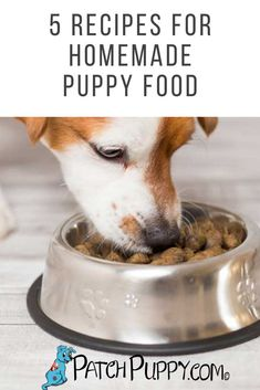 Good nutrition is important to the health and growth of puppies. Here are 5 recipes for homemade puppy food. Diy Dog Treats, Dog Treat Recipes, Dog Food Recipes, Puppy Food Homemade, Frozen Dog, 5 Recipe, Best Puppies, Doggy Stuff, Dog Snacks