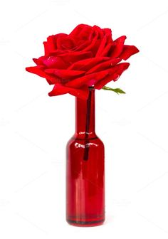 Perfect red rose in red vase isolated. Be My Valentine. $6.00