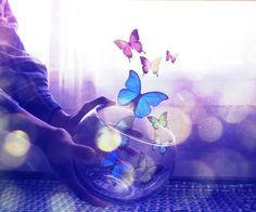 butterfly resmi