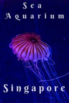 Sea Aquarium Singapore  #Aquarium #Singapore #VisitSingapore #Sentosa #SeaAquarium